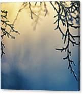 Branch Of Pine Tree Canvas Print
