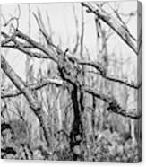 Branches In Black And White Canvas Print