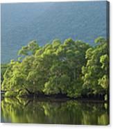 Brazilian Rainforest Canvas Print