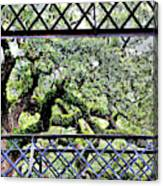 Bridge Through Live Oaks Canvas Print