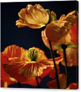 Bright Orange Poppies Canvas Print