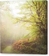 Broceliand Path Canvas Print