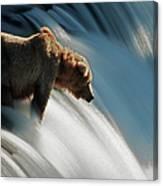 Brown Bear At Brooks Falls Canvas Print