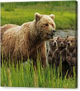 Brown Bear Sow And Cubs, In The Long Canvas Print