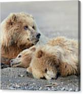 375d0f57 by Linda D Lester. Brown Bear With Cubs Canvas Print