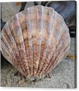 Brown Cockle Shell And Driftwood 2 Canvas Print