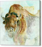 Buffalo Bison Canvas Print