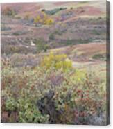 Buffaloberry Prairie Canvas Print