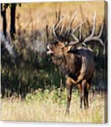 Bull Elk 3068 Canvas Print