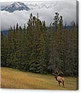 Bull Elk In Meadow With Snow Covered Canvas Print