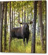Bull Moose In Fall Forest Canvas Print