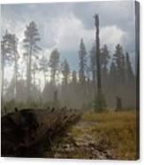 Burned Trees At Lassen Volcanic Canvas Print