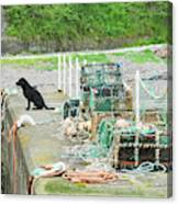 Burnmouth Harbour With Dog On Pier And Lobster Pots Canvas Print
