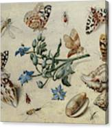 Butterflies, Clams, Insects Canvas Print