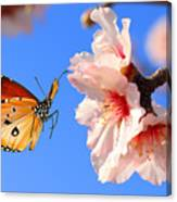 Butterfly And Pink Almond Tree Blossom Canvas Print