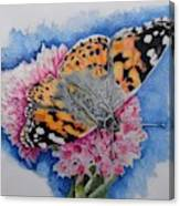 Butterfly At Lunch Canvas Print