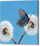 Butterfly On Dandelion Canvas Print