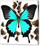 Butterfly Patterns 25 Canvas Print