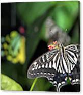 Butterfly Perfect Canvas Print