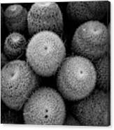Cactus Black And White 5 Canvas Print