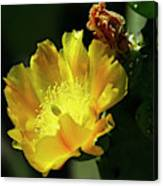 Cactus Flower and Buds Canvas Print