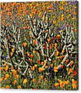 Cactus Poppies And Bluebells Canvas Print
