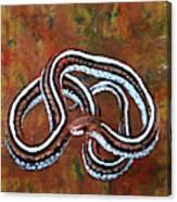 California Garter Snake Canvas Print