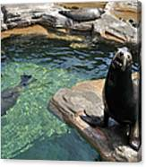 California Sea Lion And Spotted Seal Canvas Print