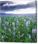 Camas Marsh 2 Canvas Print