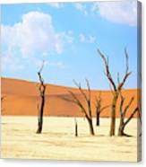 Camel Thorn Trees In Sossusvlei, Namibia Canvas Print