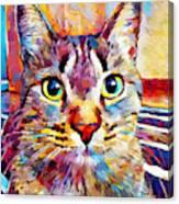 Cat 13 Canvas Print