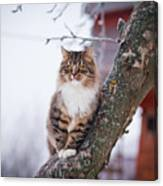 Cat Outdoors In The Winter Is On The Canvas Print