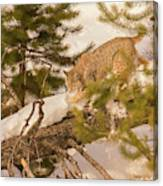 Cat Walk Canvas Print