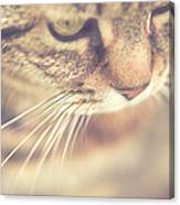 Cats Whiskers Canvas Print