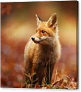 Cautious Fox Stopped At The Edge Of The Canvas Print