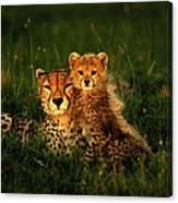 Cheetah Acinonyx Jubatus With Cubs In Canvas Print