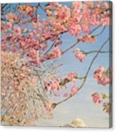 Cherry Blossoms At The Tidal Basin Canvas Print