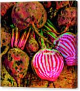 Chioggia Beets Canvas Print
