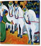 Circus Horses Dressage Canvas Print