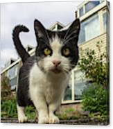 Close Up Cat On The Street Canvas Print