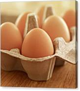 Close Up Of Brown Eggs In Carton Canvas Print