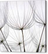 Close-up Of Dandelion Seed With An Canvas Print