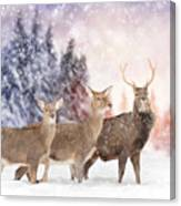 Close Young Deer In Nature. Winter Time Canvas Print