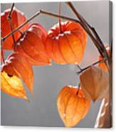 Closeup Of Delicate Physalis Flowers Canvas Print