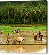 Coastal Karnataka Canvas Print