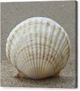 Cockle Shell 2015c Canvas Print