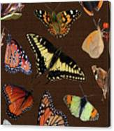 Collage Of Ca Butterflies Canvas Print