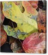 Collective Autumn Color Canvas Print