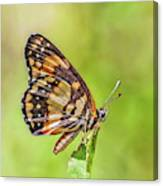 Colorful Butterfly Canvas Print