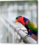 Colorful Lory Canvas Print